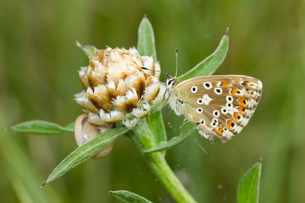 초원에서 흰 꽃에 아름다운 나비의 부드러운 초점