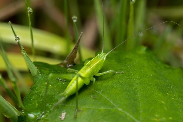 정원에서 잔디 꽃에 녹색 메뚜기의 부드러운 초점