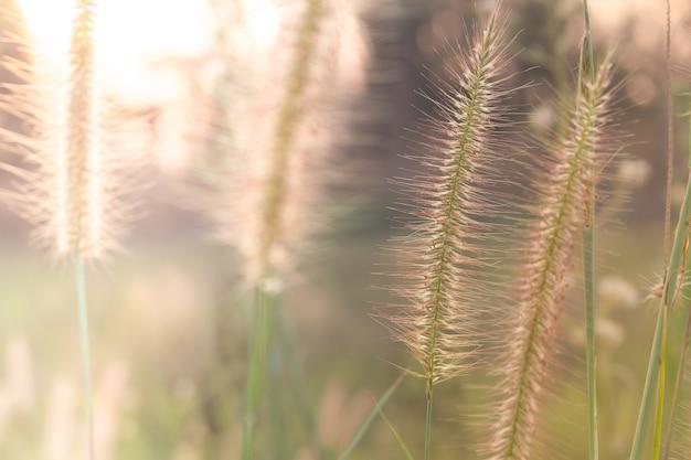 태양 광선, 꽃 배경으로 초원 꽃의 소프트 포커스.