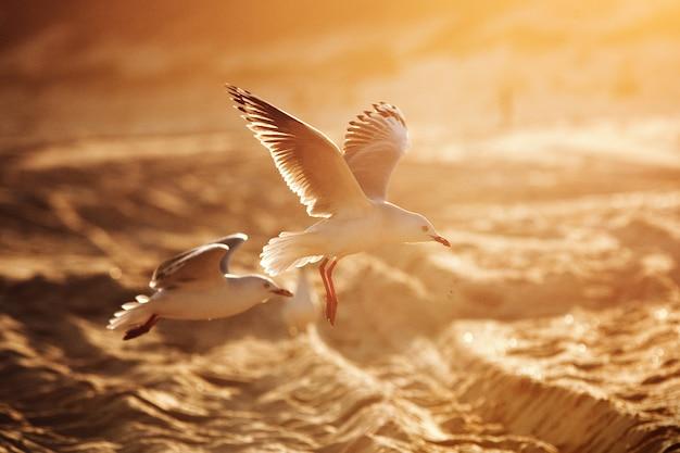 황금빛 햇빛이 비치는 해변 위를 나는 갈매기에 대한 부드러운 초점