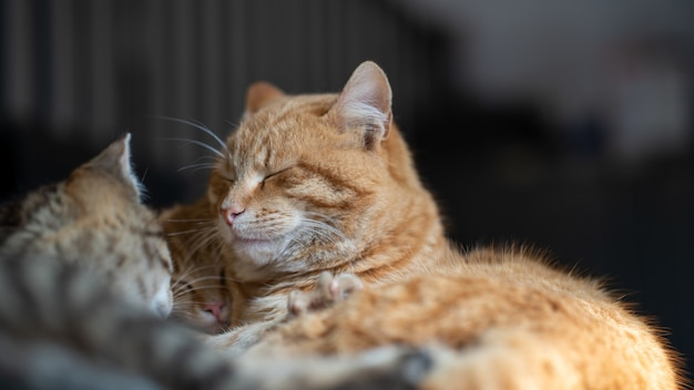 Soft focus of pet cats cuddled and sleeping together in a house