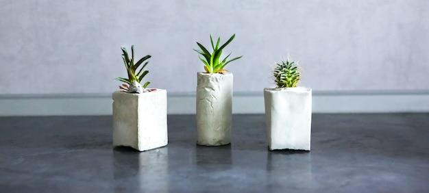 ソフトフォーカス写真。キッチンのコンクリート植物ホルダーの小さな多肉植物。さまざまな形の手作りの花瓶に小さなサボテンと苔。スタイリッシュで環境にやさしいプランター。