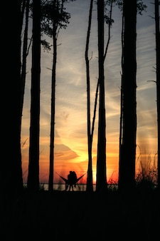 Soft focus silhouette of a couple in love sitting in a hammock hugging in pine forest