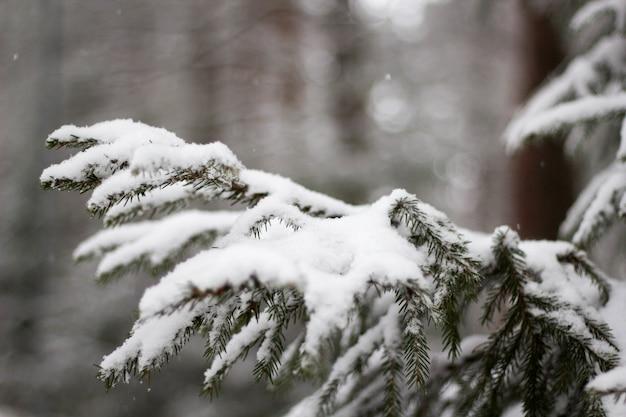 Soft focus dell'albero di abete rosso innevato contro uno sfondo sfocato in inverno