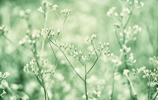 Мягкий фокус белая и зеленая трава, луговая трава весенняя природа