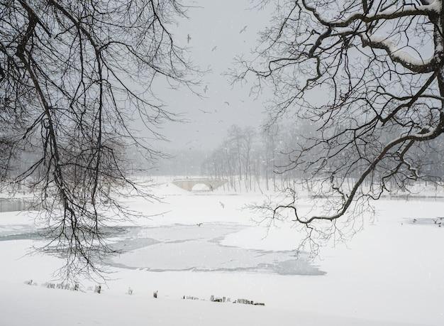 ソフトフォーカス。雪の日の都市公園の水面の積雪とたくさんのカモメの飛翔に模様のある冬の湖。ガッチナ。ロシア。