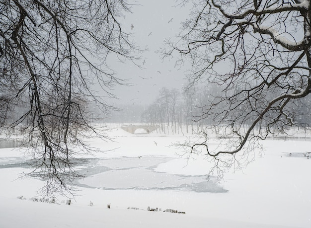 Soft focus. winter lake with patterns on the snow cover of the water and lots of flying gulls in the city park on a snowy day. gatchina. russia.