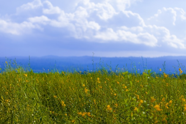 Soft focus of yellow  field under blue sky. nature background