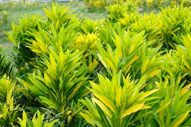 Soft focus, yellow leaf background