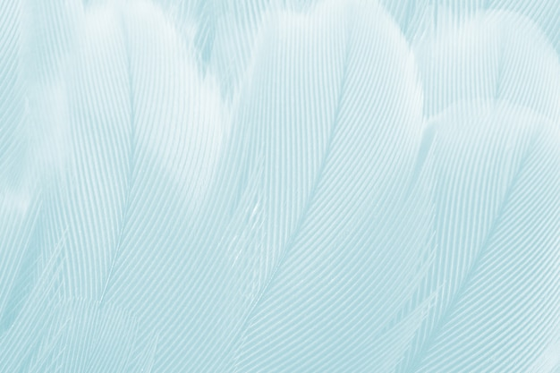 Soft green feather background