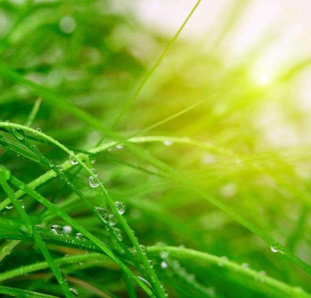 柔らかい緑の草の背景