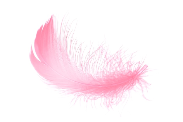 Soft and light pink feather isolated