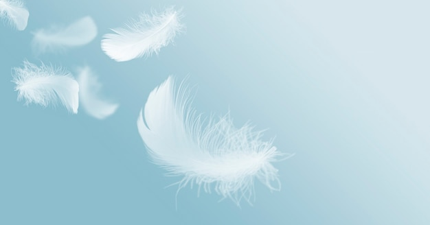 Soft lightly fluffy white feathers floating in the sky