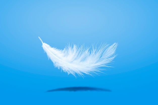 Soft lightly ofwhite feather falling down in the air