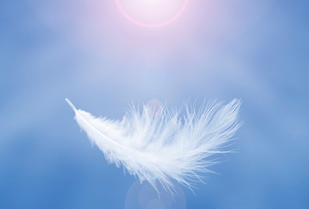 Soft lightly of white feather floating in a blue sky abstract feather flying in heavenly