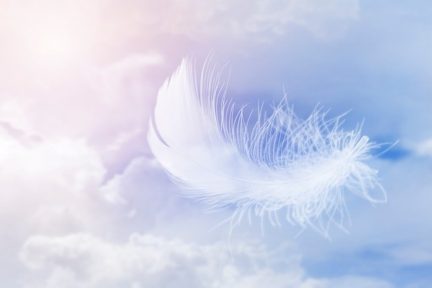 Soft lightly of white feather floating in the sky with clouds abstract feather flying in heavenly