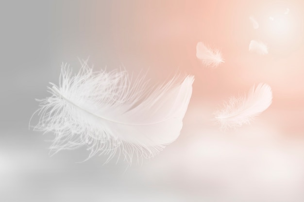 Soft lightly of white feathers floating in the sky abstract feather flying in heavenly