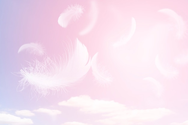 Soft lightly of white feathers floating in the sky with clouds  feather flying in heavenly
