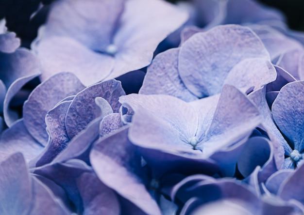 ソフトライラックアジサイまたはオルテンシアの花びら。浅い被写界深度で柔らかな夢のような感触。