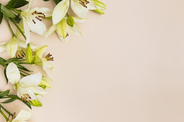 Soft lilies on beige background
