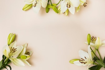 Soft lily flowers on beige background