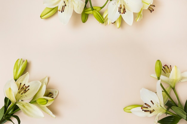 베이지 색 배경에 부드러운 백합 꽃
