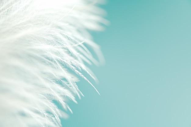Мягкое натуральное перо. пух белого страуса. пустое место для копирования справа для креативного дизайна или текста. стиль мокапа. изолированные на голубом фоне.