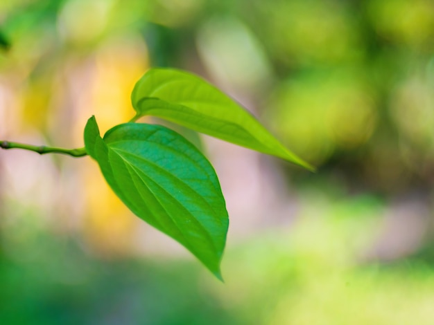ソフトフォーカス。美しい緑のキンマは、テクスチャの背景を残します