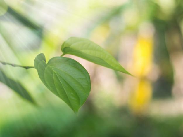 초점이 부드럽습니다. 아름 다운 녹색 구장 잎 질감 배경