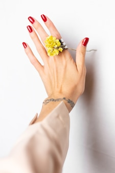 Soft photo of woman hand red manicure, ring on finger, hold cute yellow little dry flower, white.