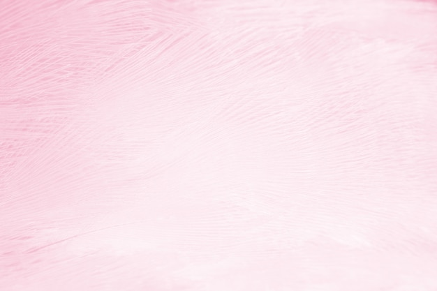 Soft pink feather background