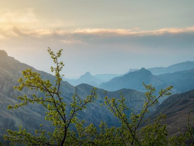山の風景の柔らかなピンクの夕日。手前の緑の茂み。日没時の夕方の山のシルエット。