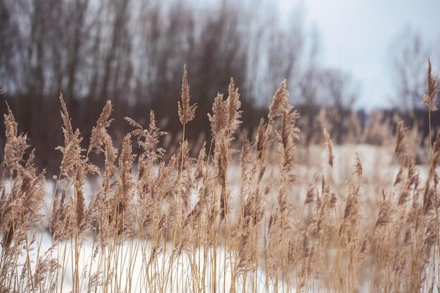 흐린 날에는 바람과 함께 움직이는 부드러운 식물