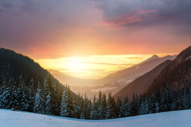 Soft sunset in winter snow covered mountains with dark pine trees and distant high peaks.