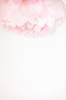 コピー用のスペースで分離された白の柔らかい白とピンクの牡丹トップフレーム
