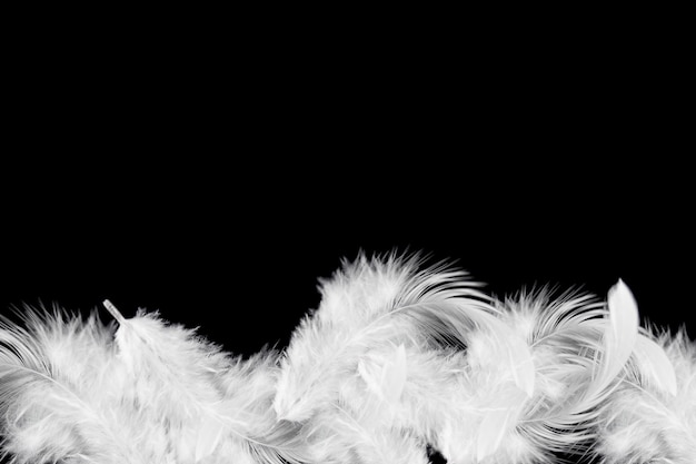 Soft white feathers background