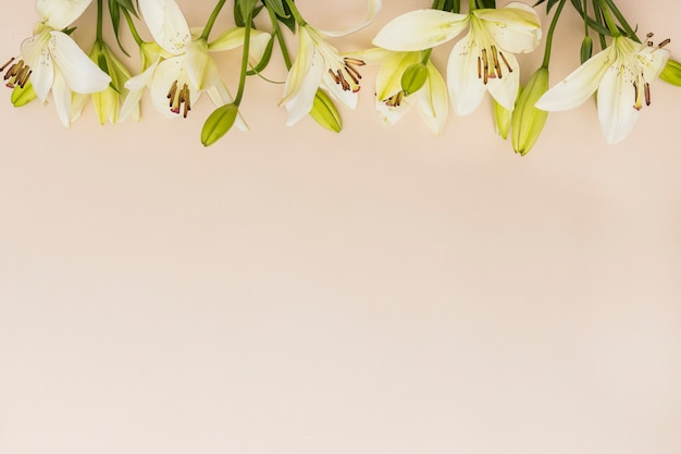 Soft yellow lilies on beige background