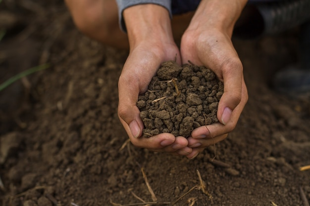 Soil in cupped hand of farmer