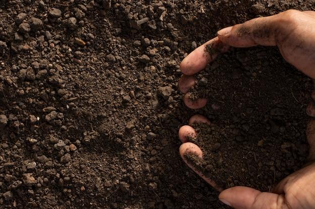 식물 재배를위한 토양, 매끄러운 비옥 한 토양.