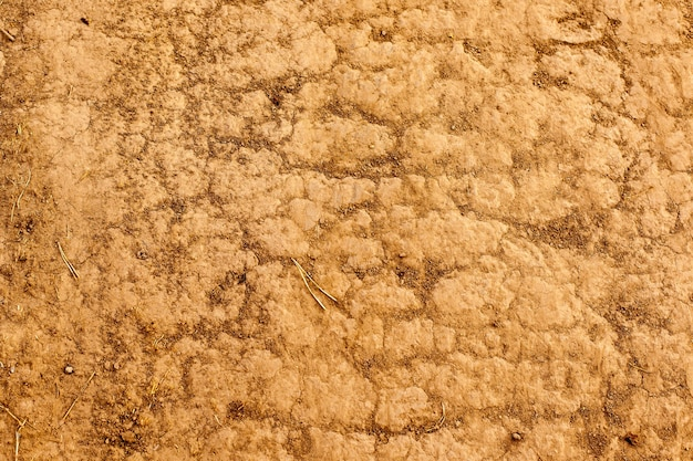 Soil on the ground as texture and background.