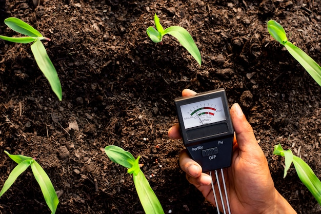Soil meter is used on loam for planting, measure soil acidity.