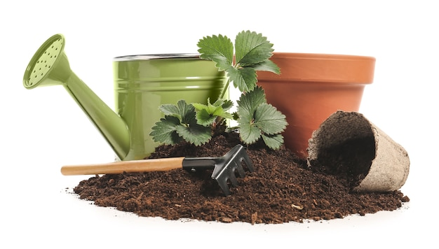 Soil, plant and gardening tools on white