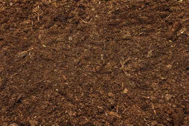 Soil texture background for gardening concept. cultivated ground, environmental surface