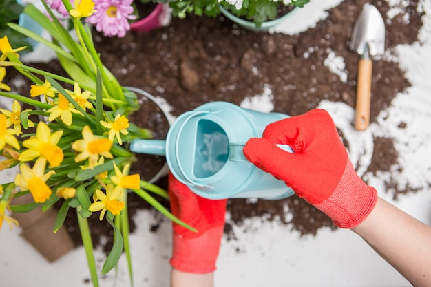 Soil, watering can, human hands in red rubber gloves watering flowers