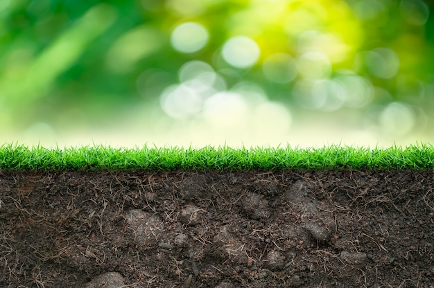 Soil with green grass and green blurred background