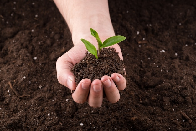Soil with sprout in hands