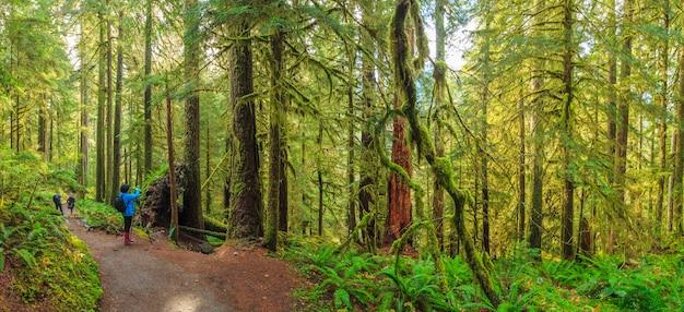솔덕 열대우림 고사리 올림픽 국립공원 미국