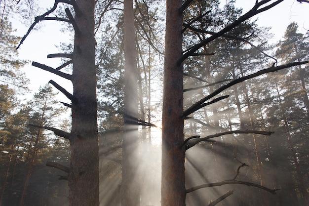 Solar beams making the way through a fog