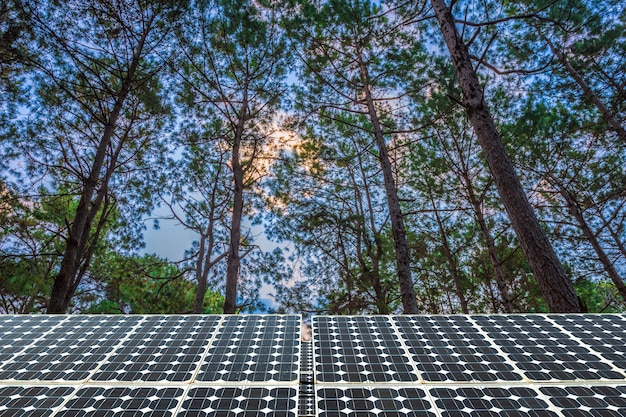 Solar panel on larch forest summer with different trees