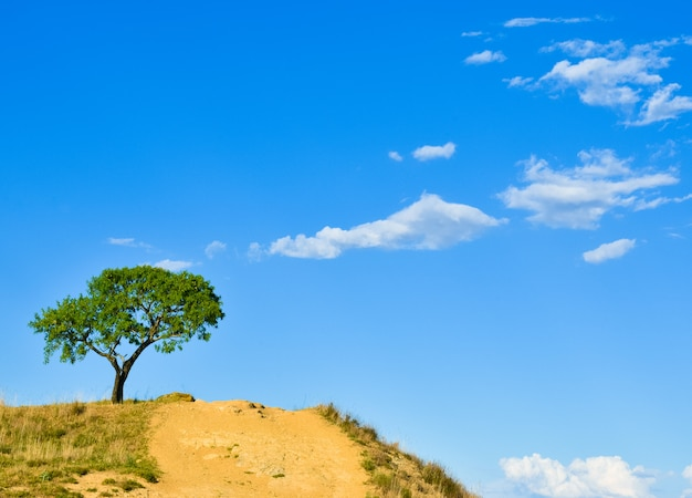 Solated tree in hill with blue and cloudy sky, salamanca, spain